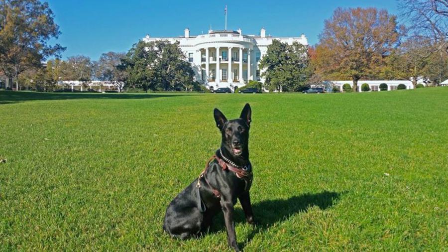 White House Dog