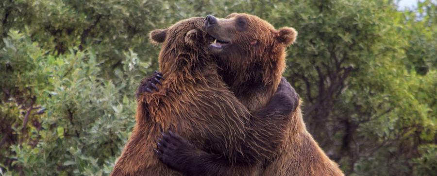 Bear Protection Act