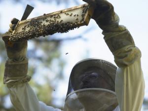 Sourwood Honey from MtnHoney Farm in Clarkesville, Georgia