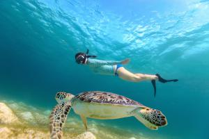 swim-with-sea-turtles