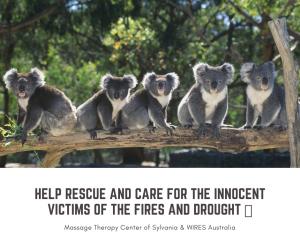 Massage Therapy Center of Sylvania donates to WIRES to help Australia's Animals