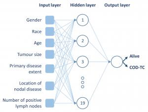 A layer of data as spots as the input into a hidden layer of artificial neurons, which does the tricks in comparing, matching, making sense of the input data, and spit out in the other end through a single spot as the output layer; in the case of thyroid