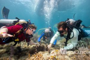 Divers restore reefs at Coralpalooza™ 2019