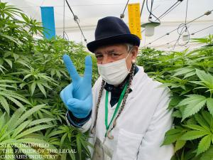 Steve DeAngelo Father of Legal Cannabis