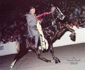 1992 Tennessee Walking Horse 2-Year-Old World Grand Champion JFK | Photo Credit: David Pruett