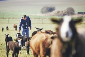 Croply Irish Goat Farmer Image