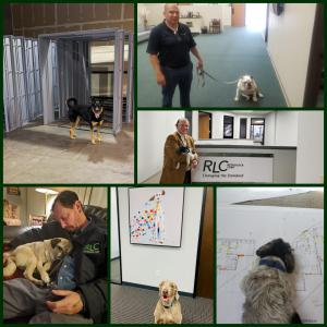 (Above are just some of the RLC family's pets in our Livermore and Orange offices)