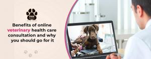 Online Vet Appointments