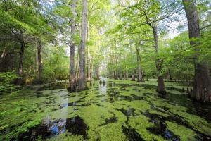 Caddo Lake and Big Cypress Bayou