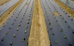 Biodegradable Mulch Film Market