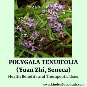 Polygala tenuifolia (Yuan Zhi) from Linden Botanicals