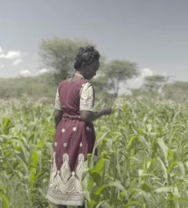 Salina, una productora de maíz de Provivi en Kenia, inspeccionando su cultivo