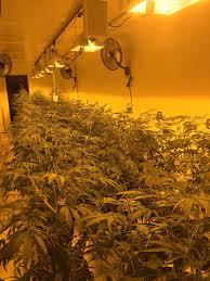 $ZAAG grow 2
