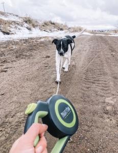 dog walking on Mighty Paw's flexi leash