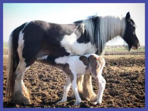 Photograph of missing Fort Lupton, Colorado foal.