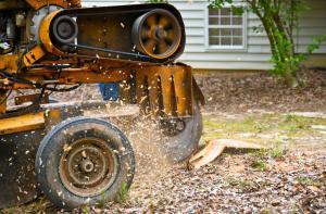 Tree & stump removal service in Scarborough