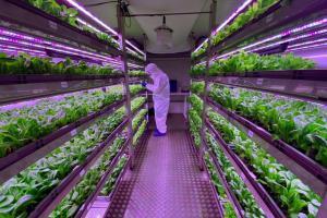 Urban Crop Solutions Grow System