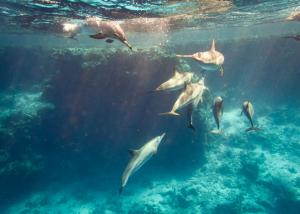 Galapagos dolphins snorkeling on a cruise