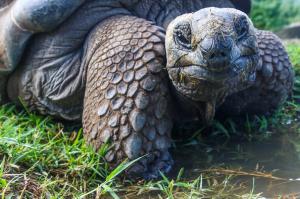 Galapagos giant tortoise cruises Samba