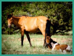 Photo wild horses on the ranch