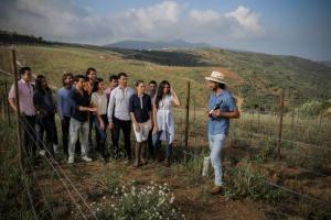 Guanajuato vineyard