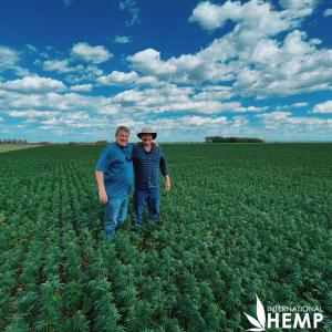 AOSCA Certified Industrial Hemp Seed Field for Grain and Fiber Hemp
