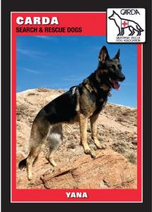 An image of Yana, a German Shepherd, standing on a rock with the CARDA Search and Rescue Logo.