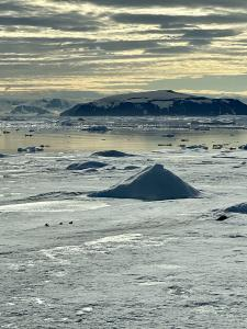Penguins traverse a melting portion of Antarctica