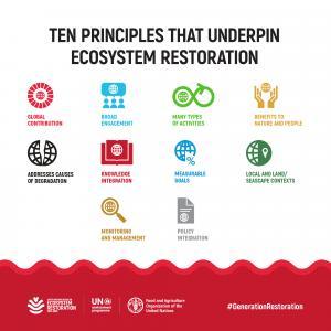The Ten Principles that Underpin Ecosystem Restoration