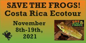 Save The Frogs Costa Rica Ecotour