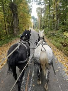 Recent trip in a wagon on a crips fall day