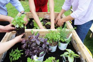 Club jardinage GoGo Quinoa