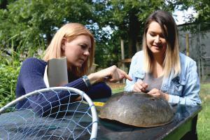 Dr. Kristen Dellinger, principal investigator, and research intern, Jordan Gannon, conducting a preliminary assessment of a mature female horseshoe crab.