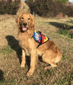 SDWR Autism Service Dog