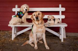 SDWR service dogs