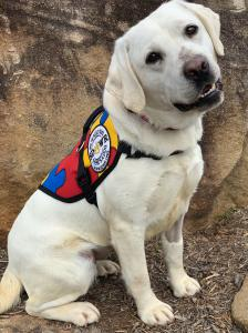 Jewell, Autism Service Dog from SDWR