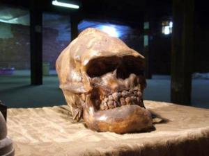 Skull Found in the vicinity of Lovelock Cave