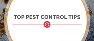 5 Things You Should Know Before Your First Pest Control Visit, According to Pavel Rombakh