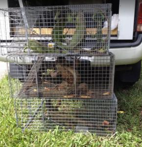 Animals caught by Wildlife Removal Services of Florida