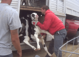 these are workers brutalizing innocent animals