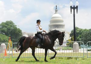 Virginia Resident Jeannie McGuire Exhibiting a Sound and Natural Walking Horse in 2014 at Walk on Washington