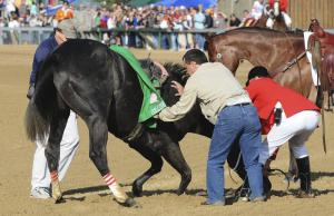 Eight Belles was euthanized after breaking both front ankles in the 2008 Kentucky Derby at Churchill Downs